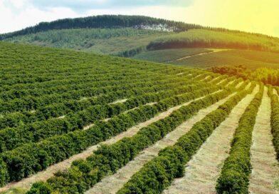 Exportações brasileiras de café em setembro atingem 3,111 milhões de sacas